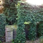 Een lastige plek in de tuin