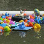 Alle eendjes zwemmen …   voor Toon